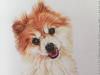 Red & White Dog Colored Pencil by Mike Kitchens Timeless Family Art