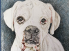 White Dog Color Pencil Drawing by Mike Kitchens Timeless Family Art 2016