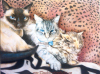 cat-colored-pencil-drawing-mike-kitchens-2011