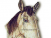 Sketch Portrait of Horse