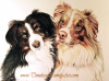 Hand Drawn Portrait of Collies