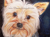 yorkshire-terrier-colored-pencil-drawing-mike-kitchens-2012